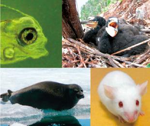 環境毒性学分野で対象とする動物種